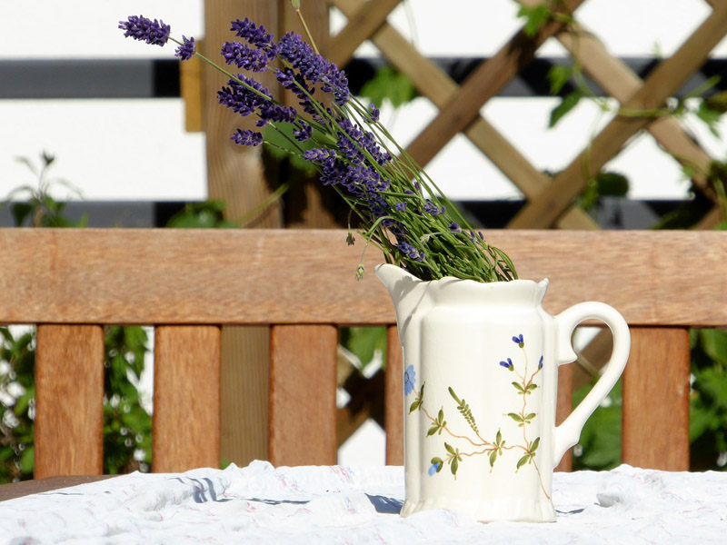 lavender-827463_800x600